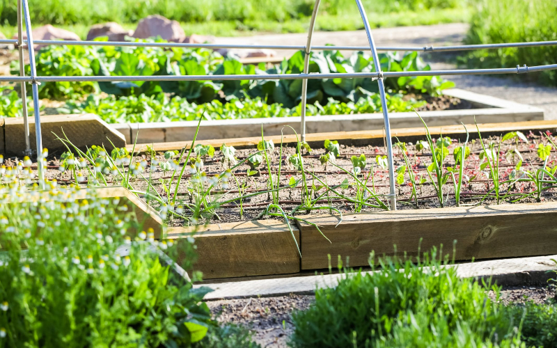 Article Title: What Is a Community Garden? Benefits and How to Start Your Own