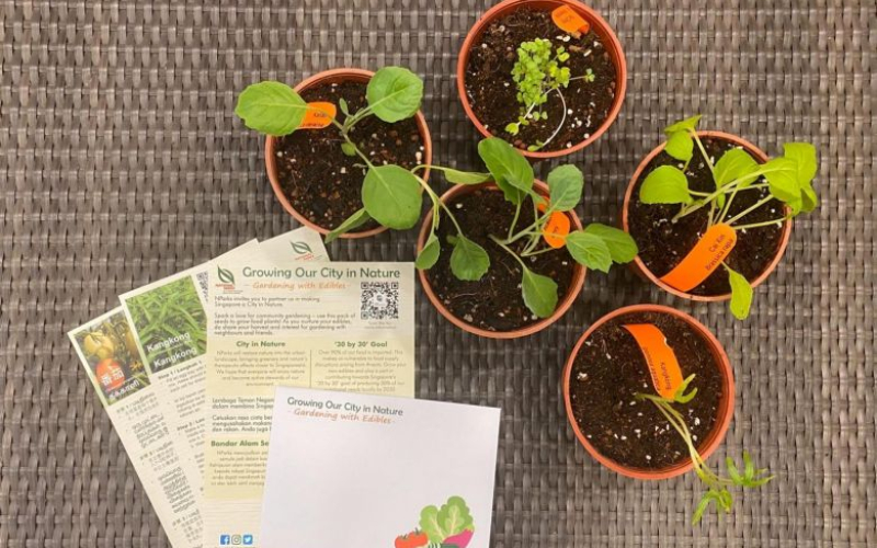 Article Title: Gardening plots to increase twofold by 2030; NParks to give away seed packets to spur growing vegetables at home